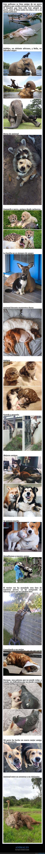 amistad,animales