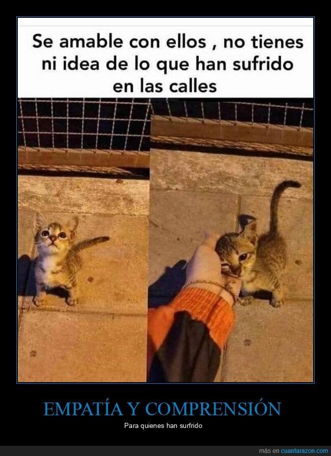 amable,calle,gato