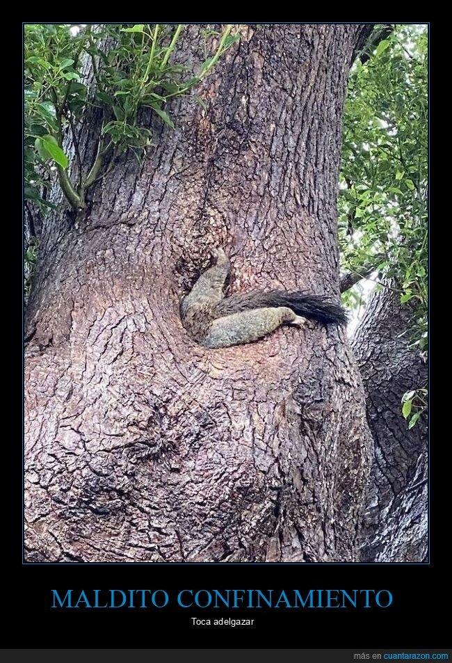 árbol,ardilla,engordar