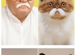 Enlace a Este fotógrafo pone a mascotas y dueños uno al lado del otro y el parecido es asombroso