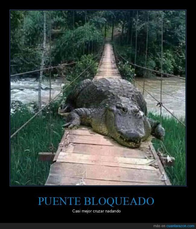 cocodrilo,puente