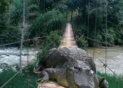 Enlace a El guardián del puente