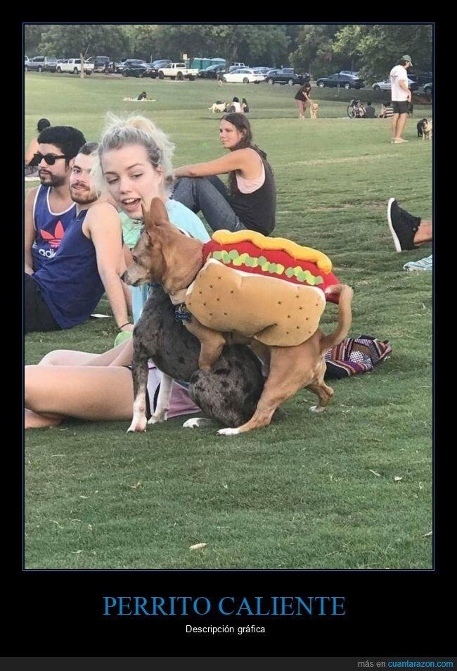 perrito caliente,perro,wtf