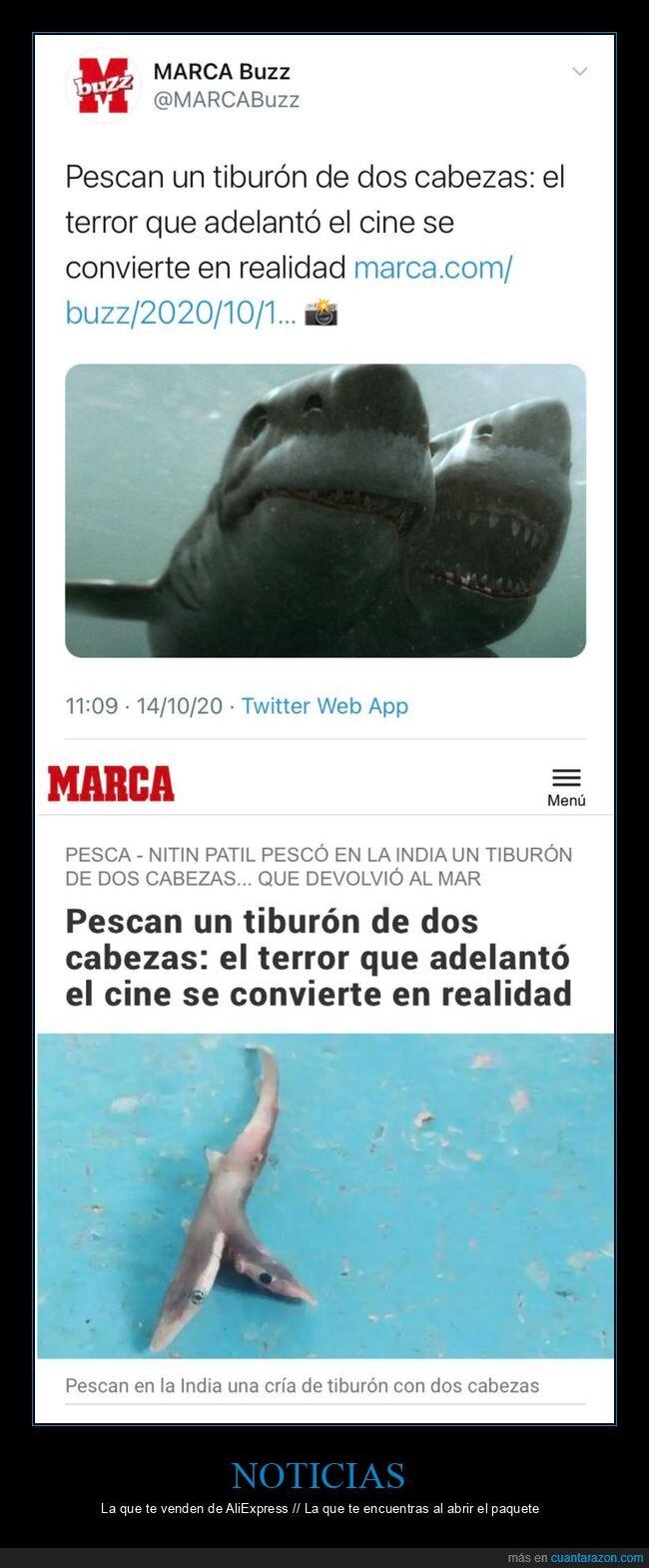 clickbait,dos cabezas,tiburón
