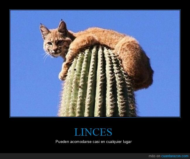 cactus,lince,wtf