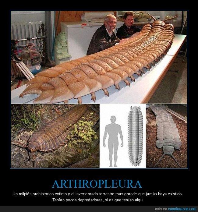 arthropleura,curiosidades,gigante,milpiés