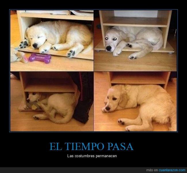 crecer,dormir,perro