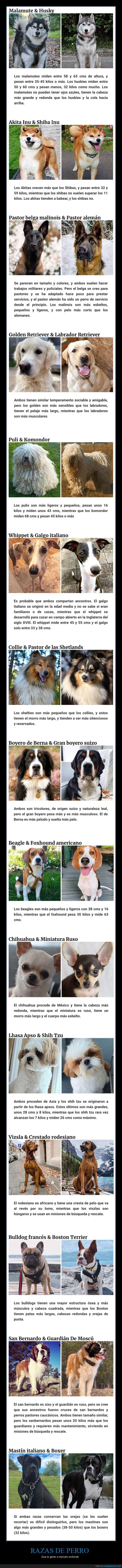 confundir,perros,razas