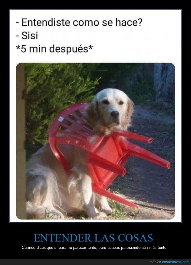 entender,hacer,perros,silla