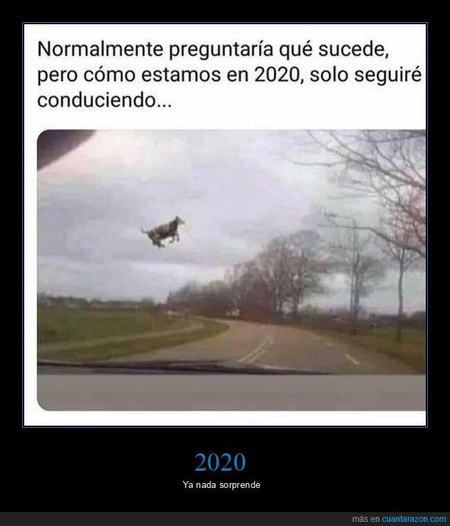 vaca,volando,wtf