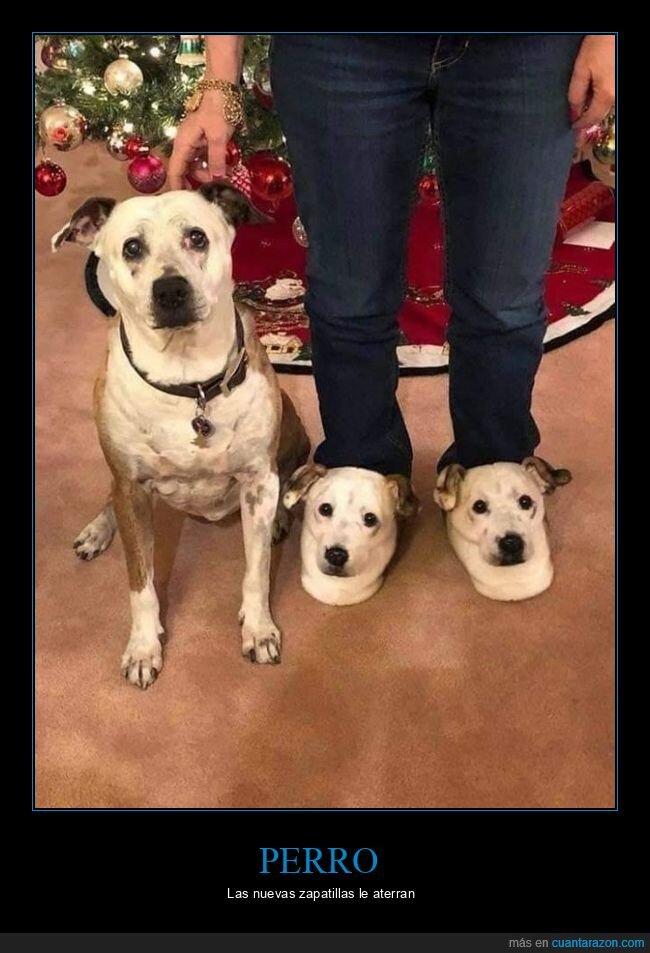 perro,wtf,zapatillas