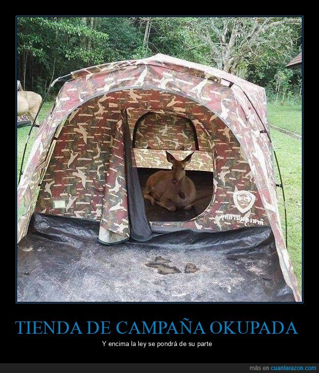 ciervo,okupa,tienda de campaña
