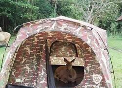 Enlace a Okupa de campo
