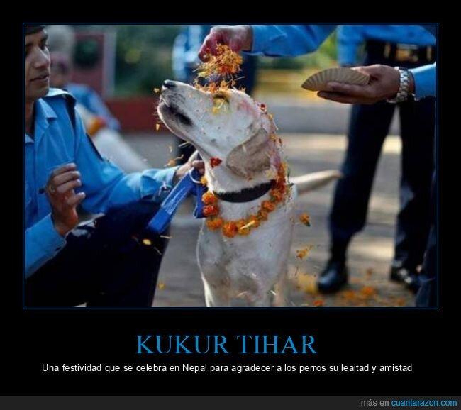 agradecer,festividad,kukur tihar,nepal,perros