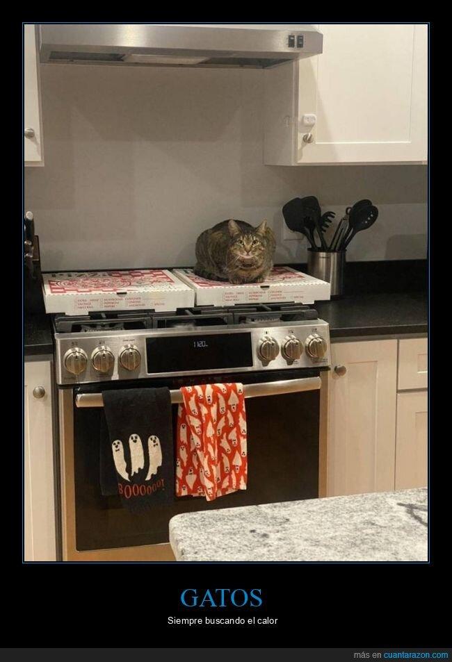caja,calor,gato,pizza