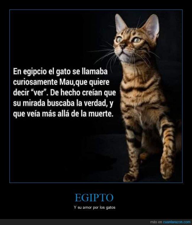 egipto,gatos