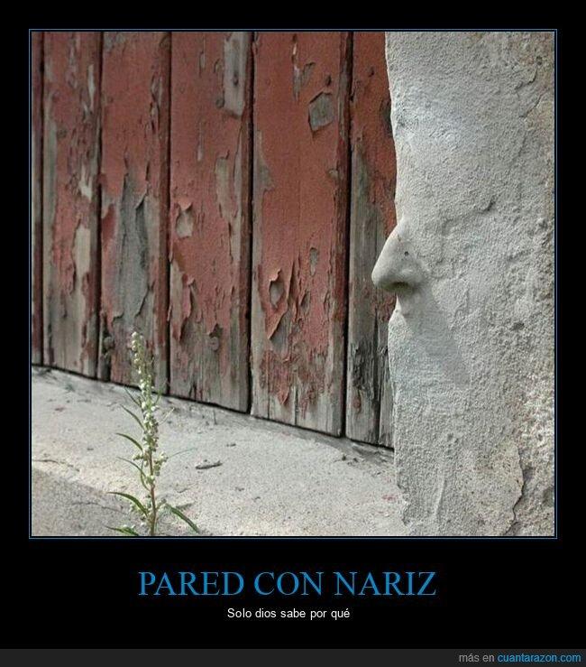 nariz,pared,wtf