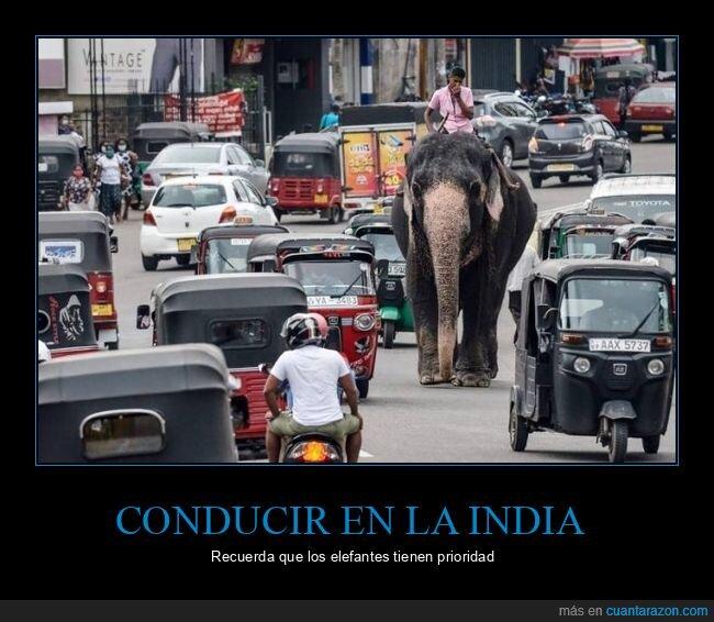 calle,elefante,wtf
