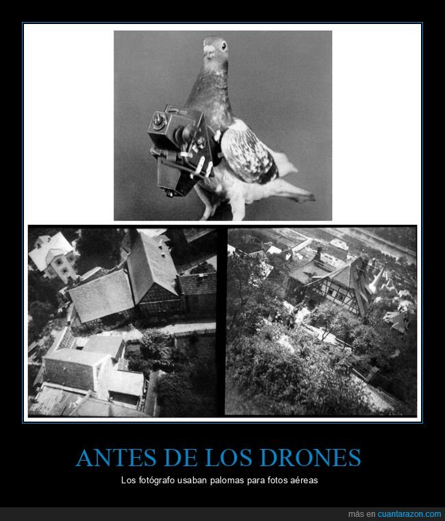 drones,fotos aéreas,palomas