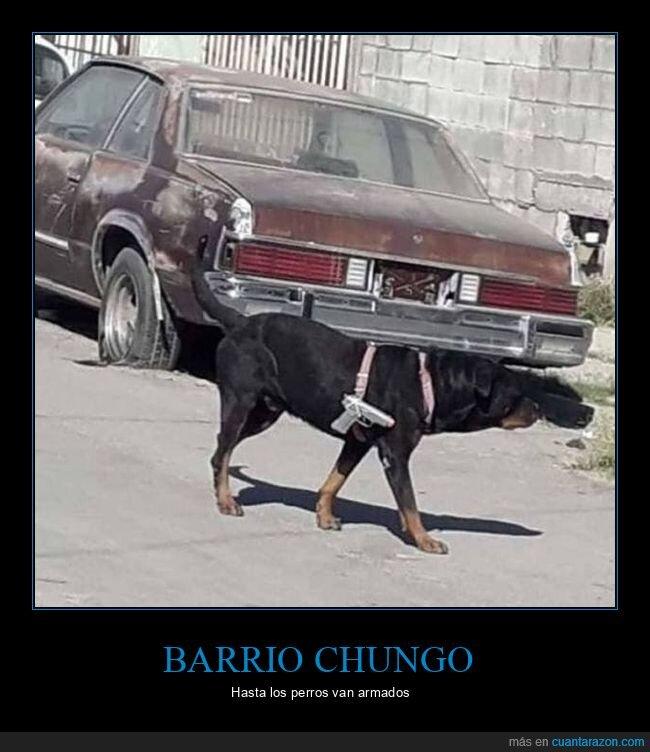 arma,perro,wtf