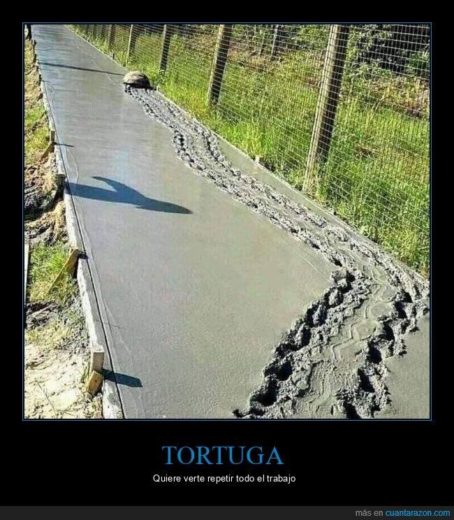 cemento,tortuga
