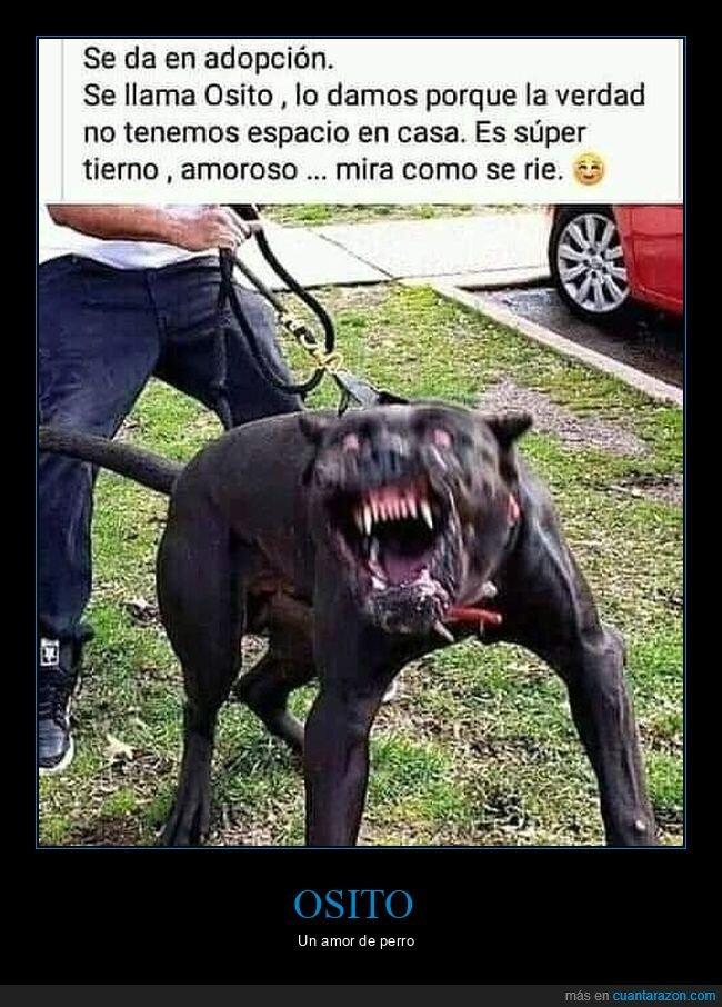 perros,wtf