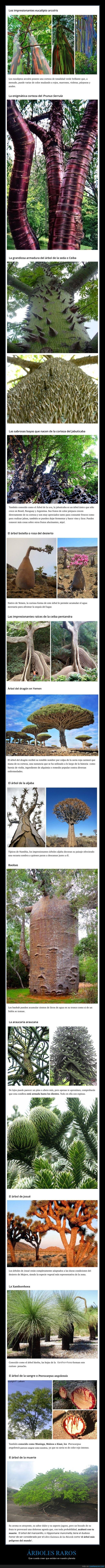 árboles,curiosidades,raros