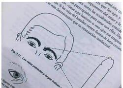 Enlace a Cosas que se pueden saber a través de las cejas de una persona
