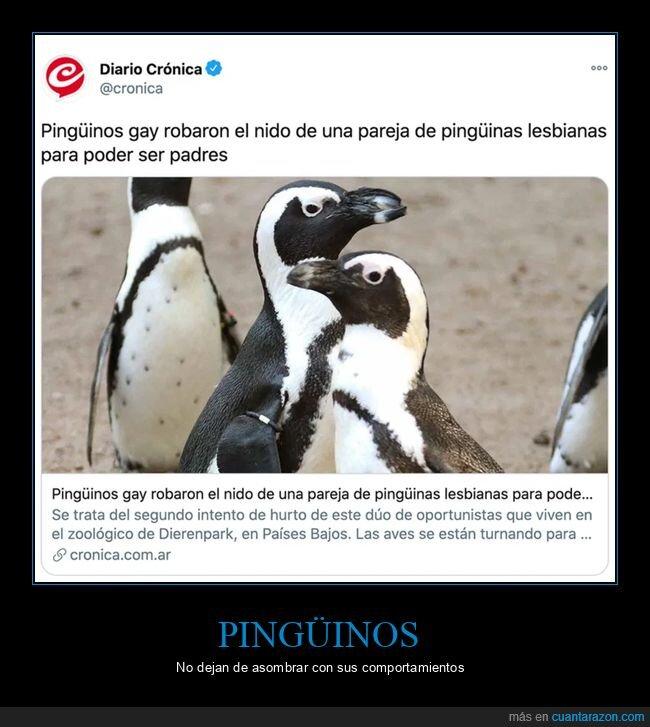 gays,nido,pingüinos,robar,wtf