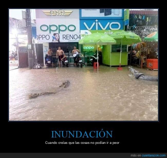 cocodrilos,inundación
