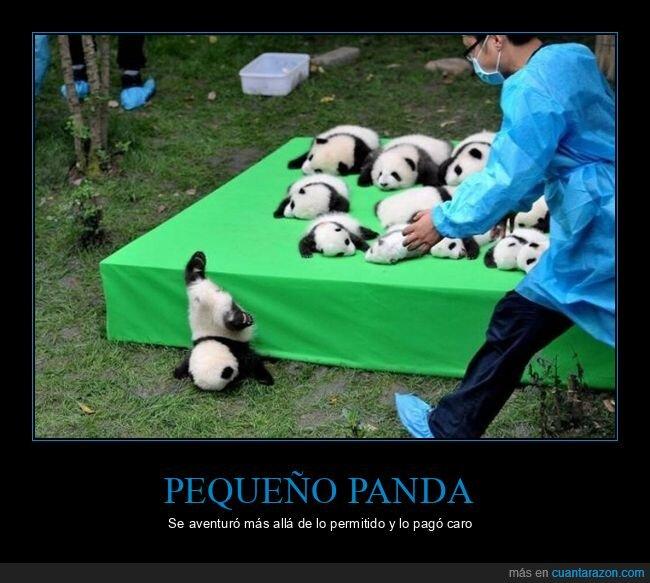 fails,panda
