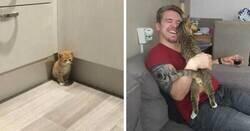 Enlace a Fotos muy reconfortantes de mascotas rescatadas en el mes de Octubre