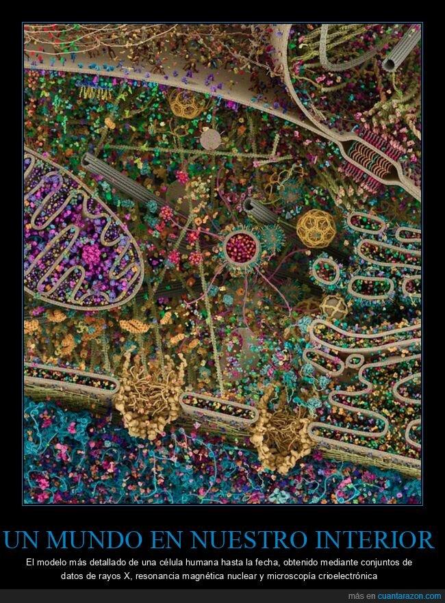 célula,curiosidades,detalle