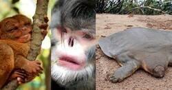 Enlace a Algunos de los animales más raros del mundo
