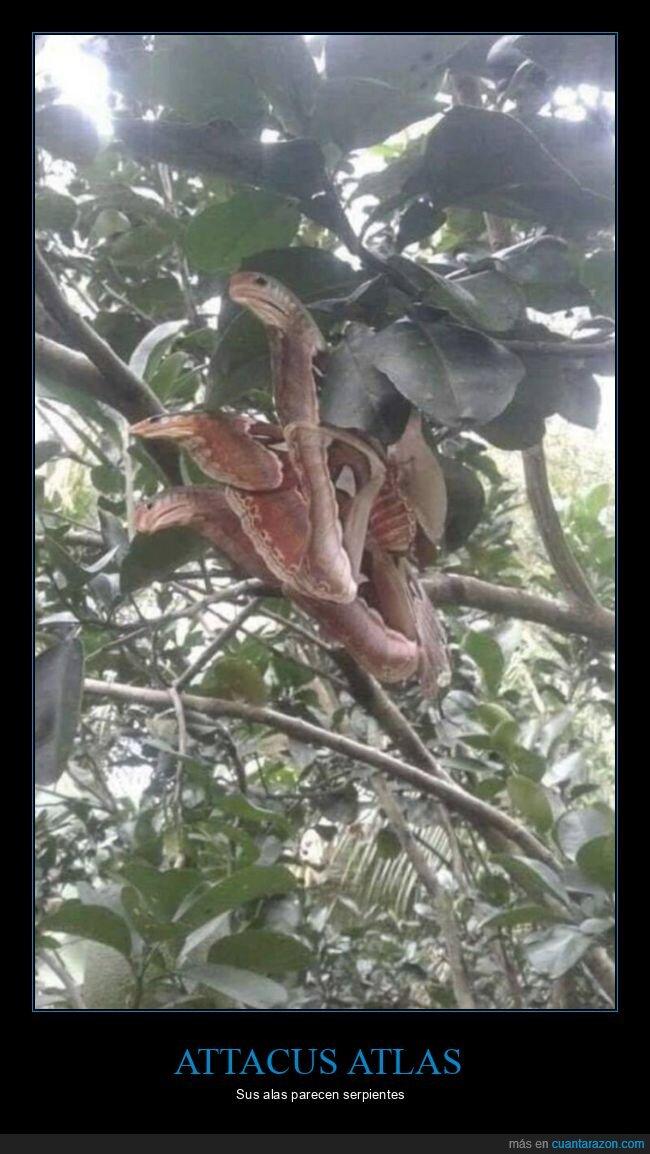alas,mariposa,serpientes