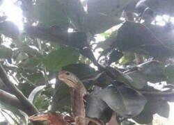 Enlace a La mariposa serpiente