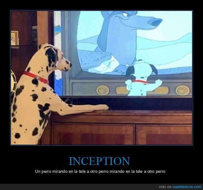 inception,perros,televisión