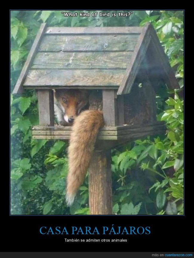 casa para pájaros,zorro