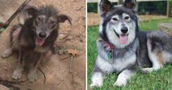 Enlace a Antes y después de animales que fueron adoptados y encontraron una vida mejor