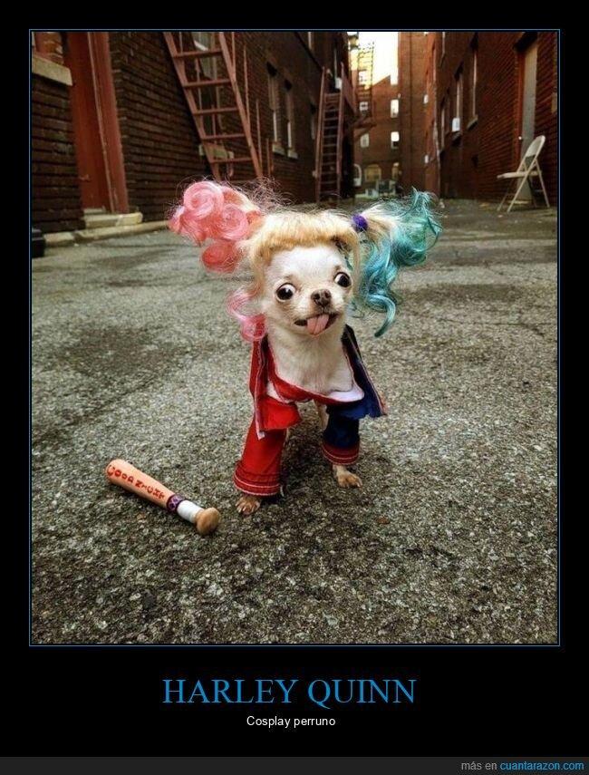 cosplay,harley quinn,perro