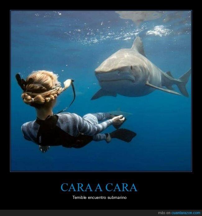 buceadora,tiburón