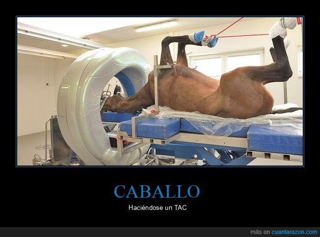 caballo,tac