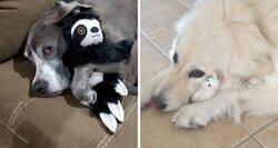 Enlace a La gente comparte foto con sus mascotas que no se separan de sus juguetes favoritos