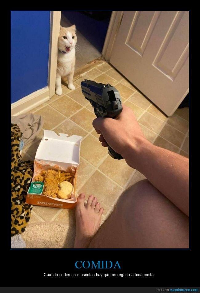 comida,gato,pistola,wtf