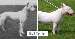 Enlace a Fotos que muestran razas de perros hoy en día y hace 100 años
