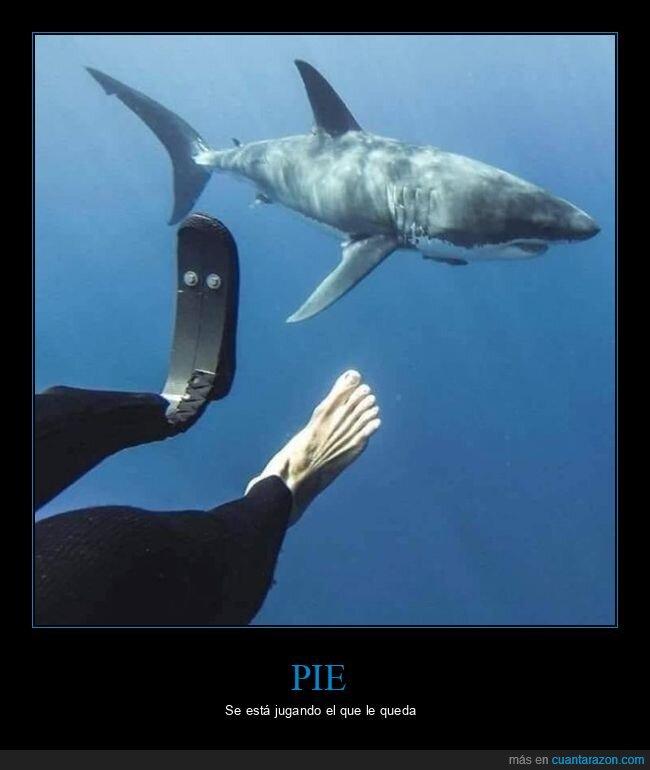 buceador,pie,tiburón