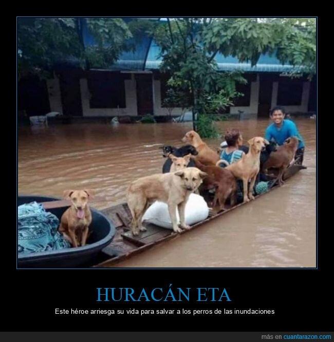 inundaciones,perros,salvando