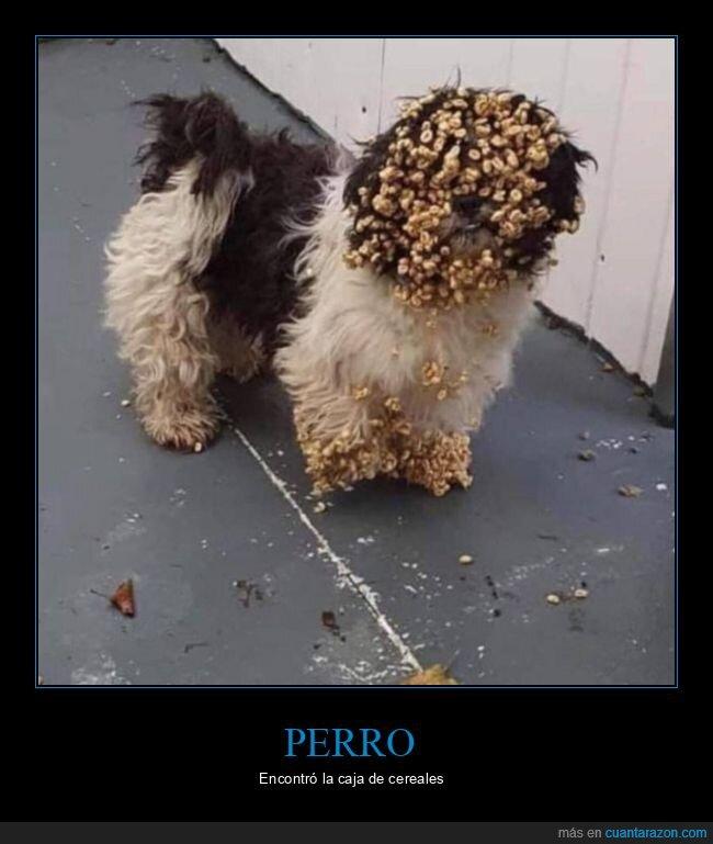 cereales,perro,wtf