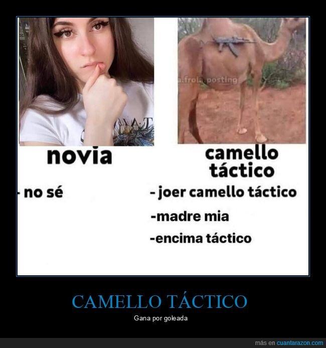 camello,comparativa,novia,táctico