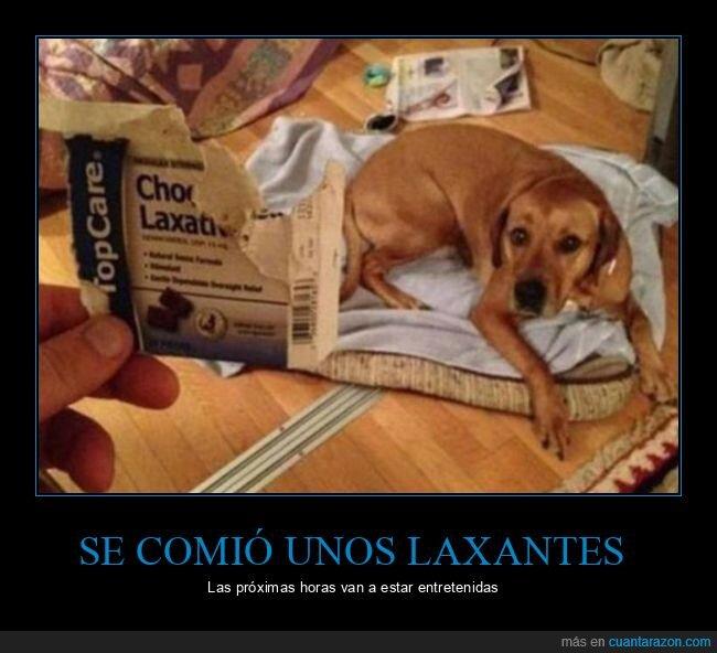 fails,laxantes,perro